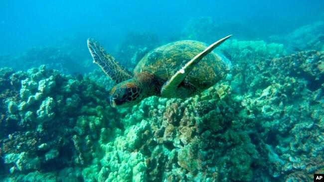 一名上海男子承认从美国走私300只活乌龟