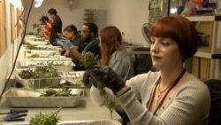 Medical Marijuana Now Legal in Majority of US States