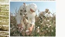 O'zbekiston - odam savdosi, majburiy mehnat / US TIP Report Uzbekistan