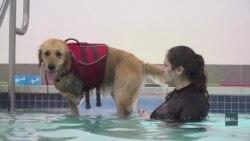 Як собаки ходять у басейн знімати стрес та зміцнювати здоров'я. Відео