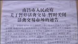 VOA连线: 关注中国禽流感疫情