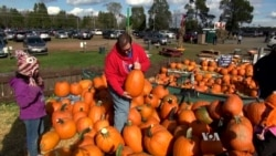 Pumpkins More Popular than Ever in US