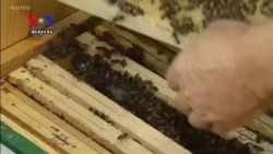 Polish Beekeepers Concerned After Banned Chemicals Temporarily Approved