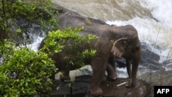 Dua gajah terperangkap di tebing di air terjun Taman Nasional Khao Yai, Thailand, 5 Oktober 2019. (Foto: Thai News Pix)