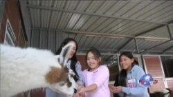 改变孩子生命的温柔的谷仓