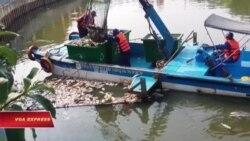Cá chết trắng kênh Nhiêu Lộc ở Sài Gòn