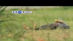 VOA60 Afirka: Uganda, Yuli 9, 2014