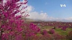 بهار و گلغندی