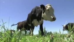 基因编辑对农业世界产生影响