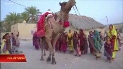 'Thư viện lạc đà' mang sách tới trẻ em nghèo nơi sa mạc