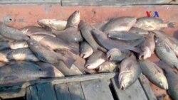 Việt Nam cấm sử dụng hải sản không an toàn từ miền Trung