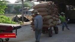 Trung Quốc ồ ạt mua gạo của VN giữa mùa dịch corona