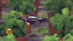 نقصان دہ کیڑوں کو پہچان کر ختم کرنے والا 'سمجھ دار' ڈرون