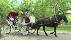 Конные экипажи в Центральном парке: быть или не быть?