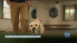 У США собаки допомагають солдатам долати посттравматичний синдром. Відео