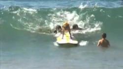 Соревнование собак-серферов в Калифорнии