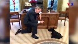 Amerika prezidentlərinin ev heyvanları
