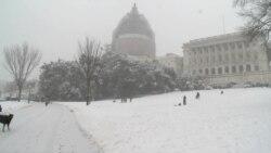 Former Senator, Children Defy Capitol Hill Sledding Ban