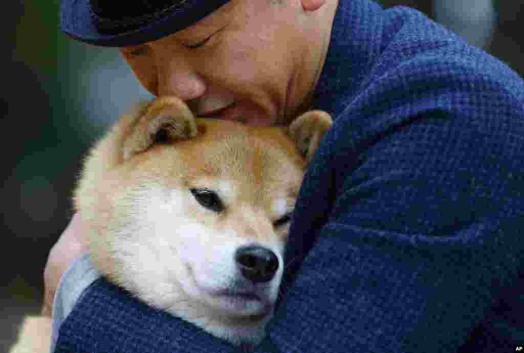In this Wednesday, Dec. 23, 2015 photo, Shinjiro Ono hugs his Shiba Inu Maru at Ueno Park in Tokyo. This bundle of fun and fur is a 7-year-old Shiba Inu who has been top dog on Instagram for several years. Marutaro has 2.2 million followers on Instagram.