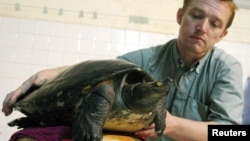 FILE - Wildlife Conservation Society Field Veterinarian Martin Gilbert from Britain holds an extremely rare Cambodian 'royal' turtle at his house in Phnom Penh on July 21,2005.