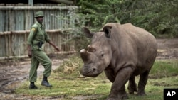 Kenya Dying Rhino Species
