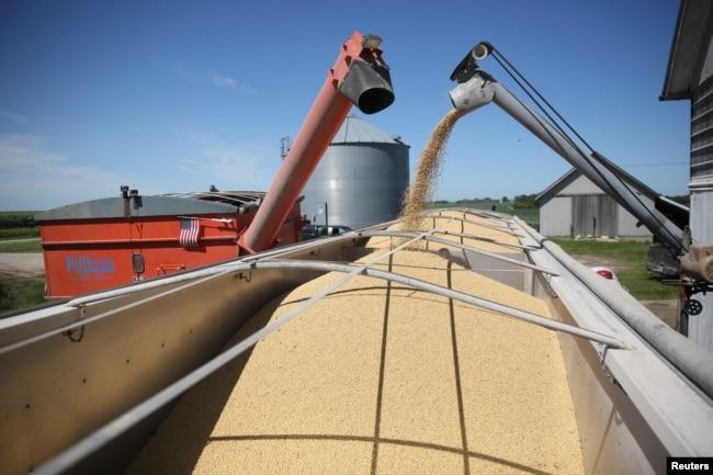 资料照:美国伊利诺伊州一个农庄正在往一辆卡车里装载大豆。(2018年7月6日)