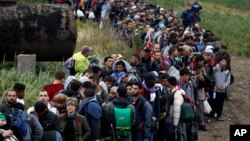 Migrants line up after crossing a border from Croatia near the village of Zakany, Hungary, Sept. 26, 2015.