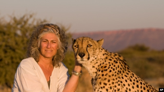 Laurie Marker - founder and executive director of the Cheetah Conservation Fund - with the late Chewbaaka, a cheetah she raised since he was orphaned almost 16 years ago.