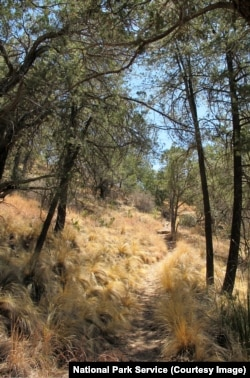 The Basin Loop Trail, Big Bend National Park