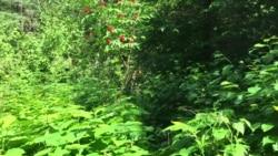 Isle Royale Trail