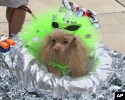 """""""希斯巴公主""""准备参加外星宠物化装比赛"""