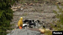 A rescuer and dog stand near a vehicle as search work continues in the mud and debris from a massive mudslide that struck Oso, Washington March 27, 2014.