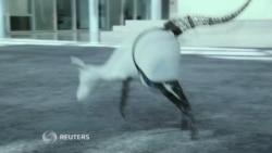 Un canguro biónico