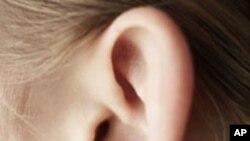 ผลการวิจัยระบุว่า อาการหูอื้อ ที่ทำให้ได้ยินเสียงก้องหรือเสียงอื้ออึงอื่นๆโดยเฉพาะในทหารผ่านศึก อาจส่งผลกระทบต่อการทำงานของสมองได้