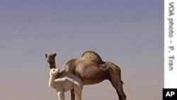 AQMI opère dans les confins désertiques des pays sahariens