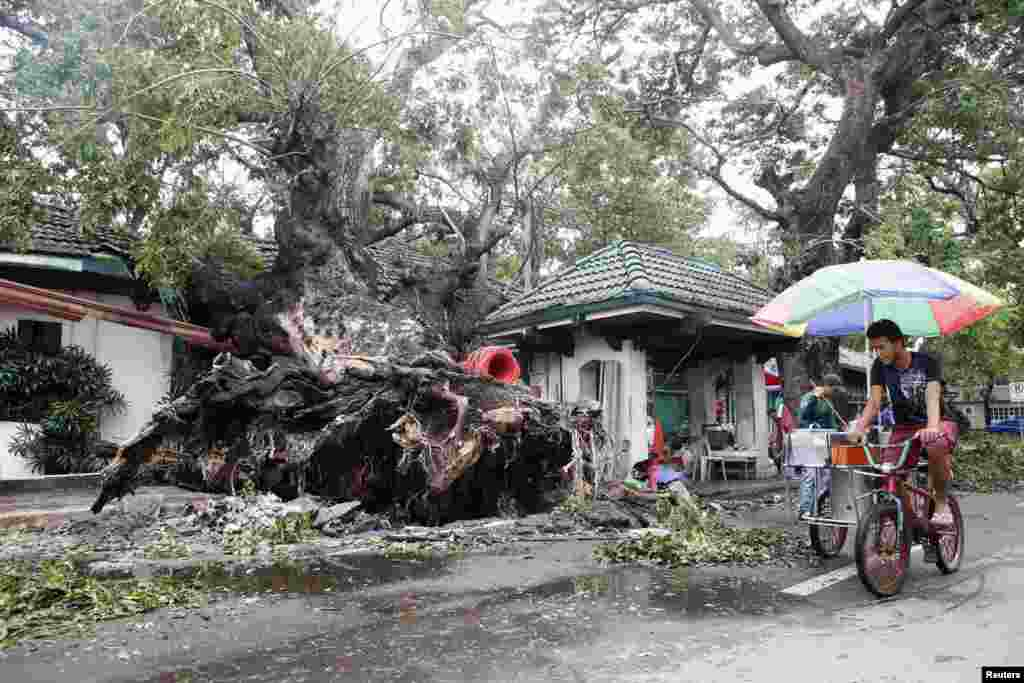 An ice cream vendor cycles past a huge fallen tree after an onslaught of Typhoon Rammasun, (locally named Glenda) in Batangas city south of Manila, July 17, 2014.