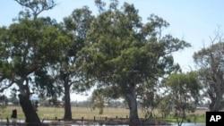Wet farmland near Forbes, NSW, Australia