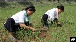 [뉴스 풍경 오디오 듣기] 미국 내 한인단체, 북한에 고구마 재배법 전수