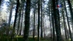 Անտառներն ու կլիմայական փոփոխությունները