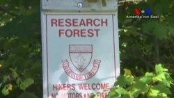 Ormanlarda Haşere İstilasına Karşı Genetik Çözüm
