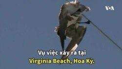 Mỹ: Điều trực thăng cứu hải âu mắc kẹt