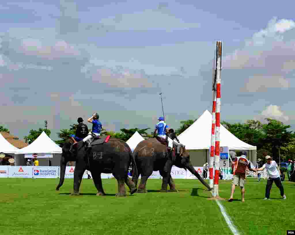 An elephant competing for Citibank moves its trunk toward the goal line, 2014 King's Cup Elephant Polo Tournament in Samut Prakan province, on the outskirts of Bangkok, Aug. 28, 2014. (Steve Herman/VOA).