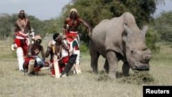 Membres de l'equipe Maasai de cricket pose avec le dernier rhinoceros blanc survivant dans le parc national de Laikipia au Kenya, juin 2014.