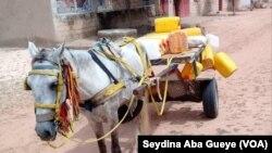 A Coki, les habitants achètent de l'eau douce pour se désaltérer, 28 août 2019. (VOA/Seydina Aba Gueye)