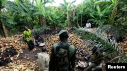 Un soldat ivoirien se tient près des agriculteurs en train de casser des cabosses de cacao, le 19 mai 2011, alors que gouvernement ivoirien veut chasser les agriculteurs de 231 réserves forestières.