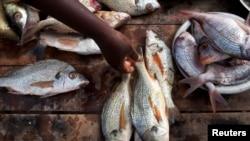 Des poissons à vendre au Sénégal, pays qui souffre de la pêche illicite qui vide ses côtes