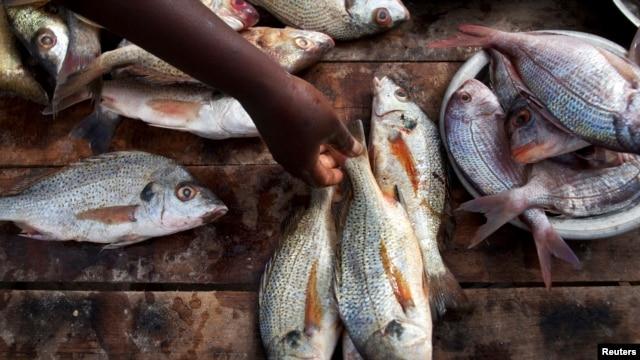Fish for sale in Dakar, Senegal (2012 photo)