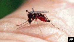 93 casos de dengue en los Cayos en 2009 y 2010, han encendido las alarmas en Estados Unidos