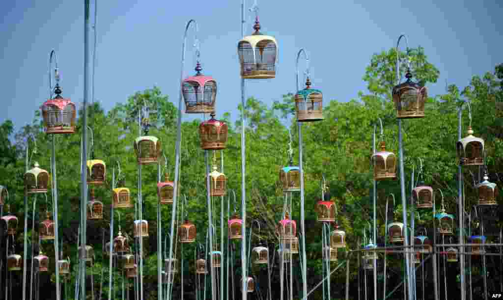 Birds sit in cages hanging from poles during a bird-singing contest in the Rueso district of Thailand's southern province of Narathiwat.
