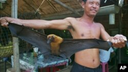 FILE - A rice soup vendor shows a giant bat to his customers at his small restaurant in the suburb of Chroy Ampil district, 15 kilometers east of Phnom Penh, Saturday, August 24, 1996.
